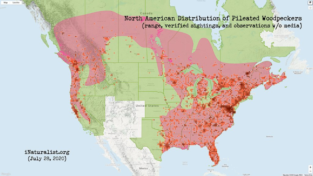 Distribution map of Pileated Woodpeckers in North America (iNaturalist.org)