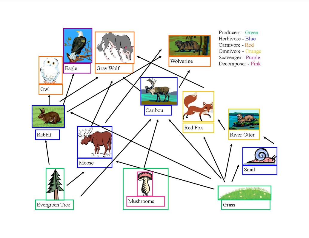 Food Web Energy Pyramid And Trophic Table