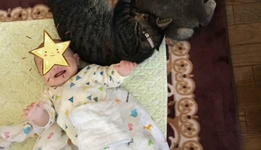 生後5〜6ヶ月の赤ちゃんの成長!2匹の猫も元気です。
