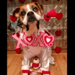 #BarkFriday Romeo the Boxer and His Bucket List Continue to Inspire