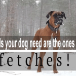 The Only Balls Your Dog Need Are The Ones He Fetches