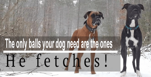 Tail-Waggers Blog | Reasons to neuter your dog