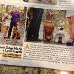 Dogs in Weddings: Abby  & Remington will see their humans tie the knot!