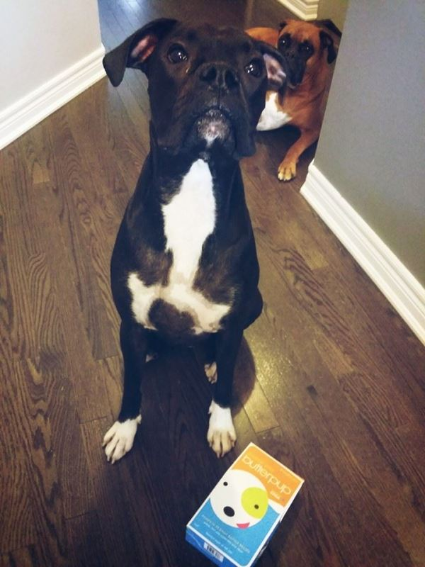 Lincoln Bark Dog Treats Review. Chico ready to try out the Sweet Little Butterpup from Lincoln Bark