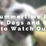 5 Summertime Pests for Dogs and Cats to Watch Out