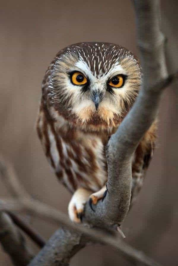 Image of: Compilation Owl Pictures Tail And Fur 60 Cute Owl Pictures Some Interesting Pictures For You To Enjoy