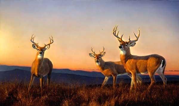 Various Types Paintings