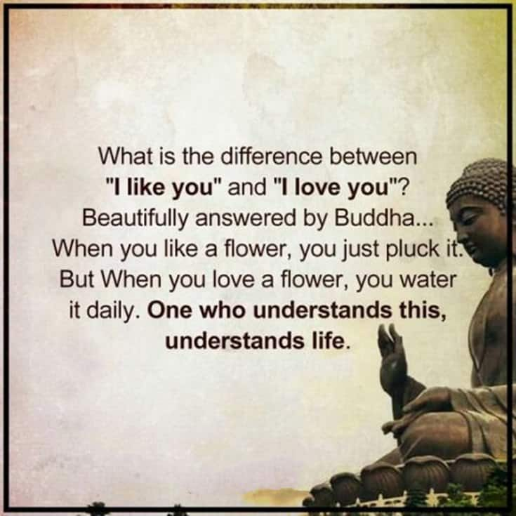 56 Buddha Quotes to Reignite Your Love 31