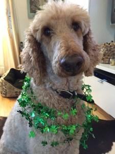 Kiss me, I'm Irish (today)!