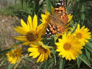 Summer Moth