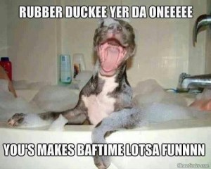 Funny-dog-in-the-bath-picture