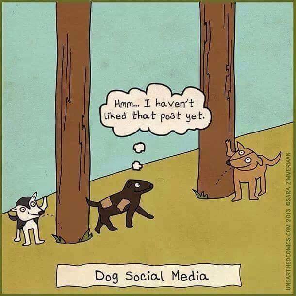 Dog social media