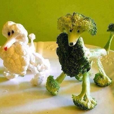 Poodle food