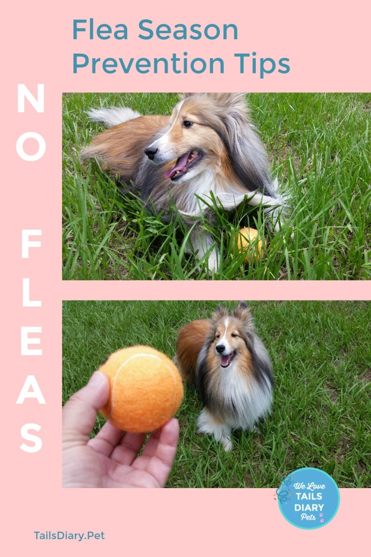 Flea season is here as pet parents we can prevent our pets get infested and sick