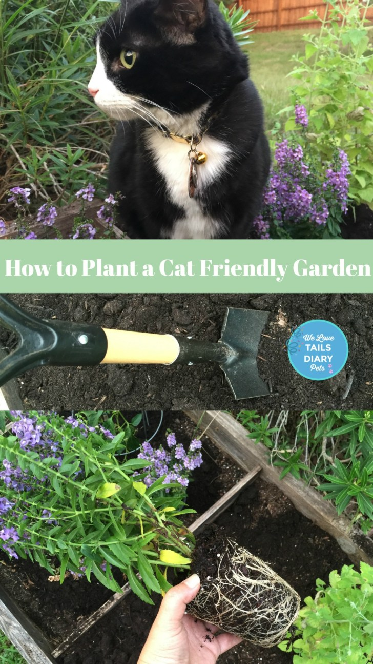 How to plant a garden for the enjoyment of the kitty at home