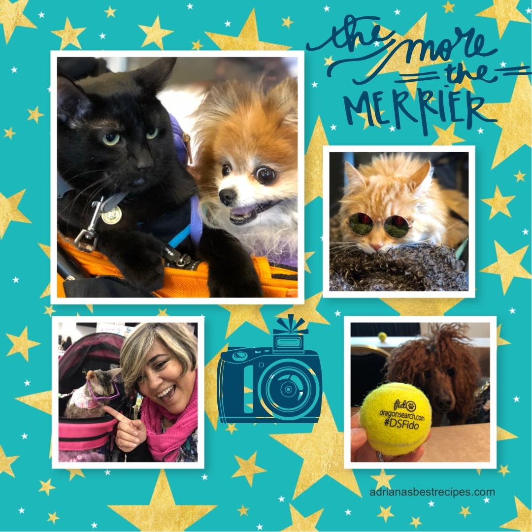 Pet Stars at BlogPaws in Kansas City, Meet Them!