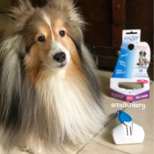 Bella on pet shedding tips