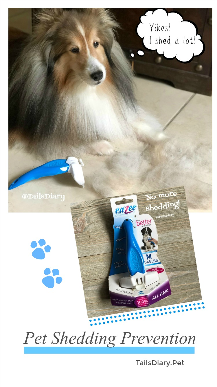 How to prevent Pet Shedding. Few tips and remedies for cats and dogs.