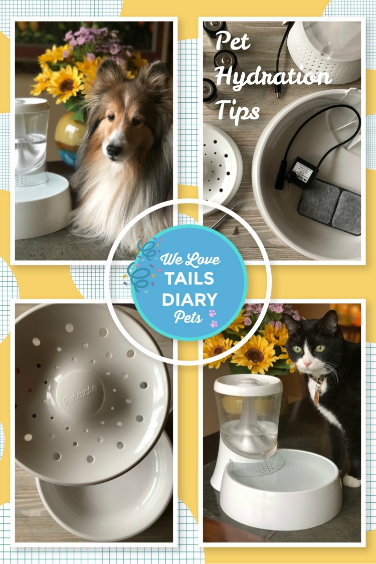 July is Pet Hydration Awareness Month