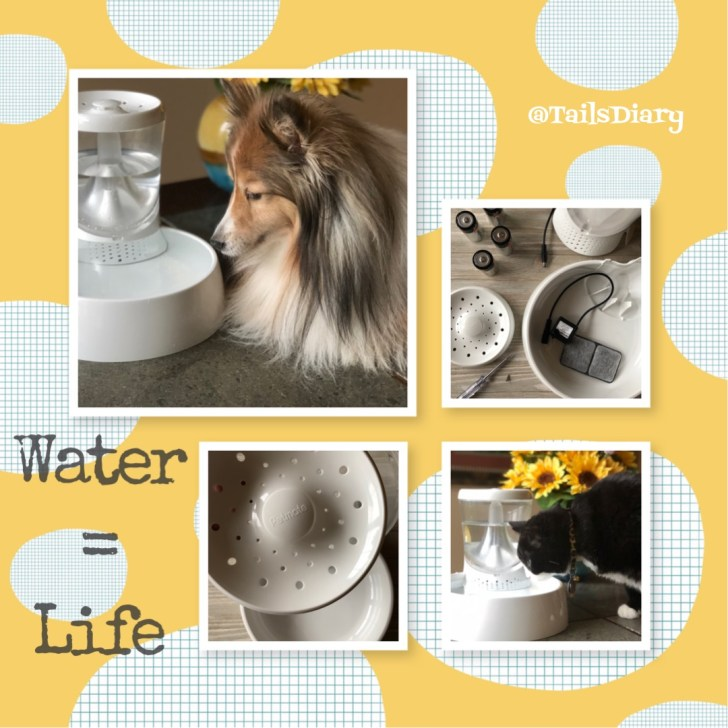 Pet Dehydration and How to Avoid it