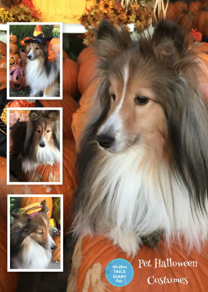 Pet Halloween Costumes Guide and Tips