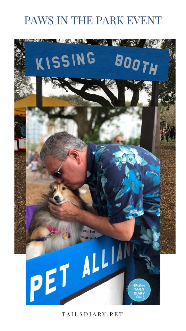 Bella, the sheltie therapy dog, attended the Paws in The Park event in Orlando!  This year Paws in The Park happened in downtown Orlando at the iconic Lake Eola.#PetAllianceGO #OrlandoPets #therapydogs