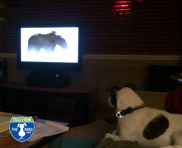 "Mick and I watched the Disney movie ""Bears"" recently. He watched for about 45 minutes, quiet and enthralled."