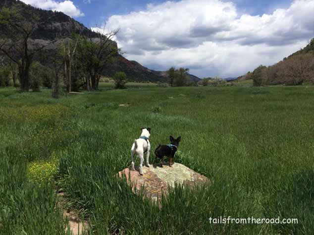 The boys and I snuck up to Durango for a few days in May. This is one of our favorite walking places when we lived here and it's never been this green, i was in awe, so much beauty.