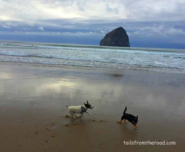 Mick & Romeo at Pacific City Beach in Oregon. Zoomies always appear on the beach!