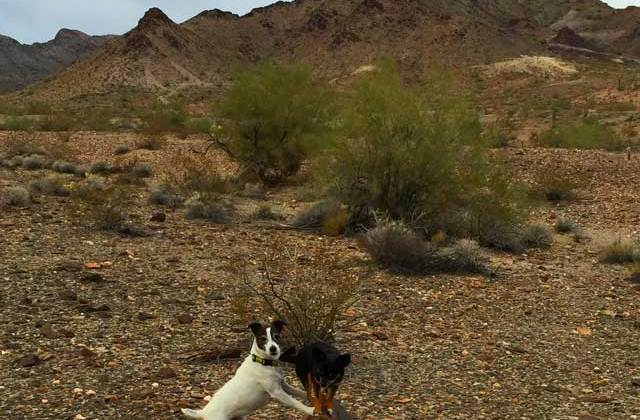 Balancing Life, Travel, Me & Dogs