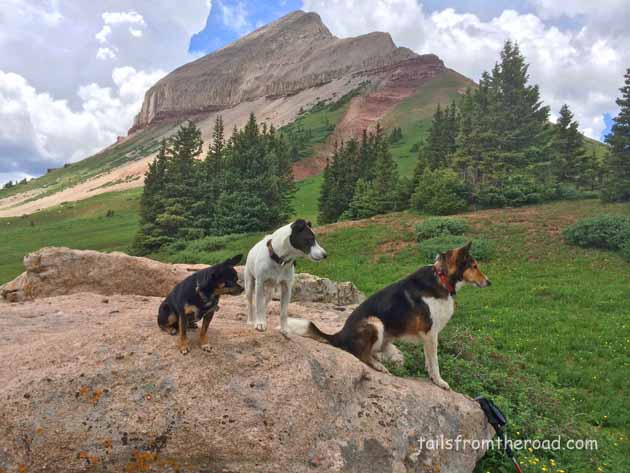 Romeo, Mick & Zippy in the high country of Colorado