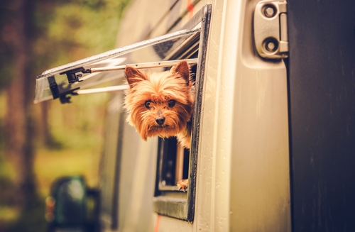 Boondocking with Dogs – The best way to Dry Camp with Dogs