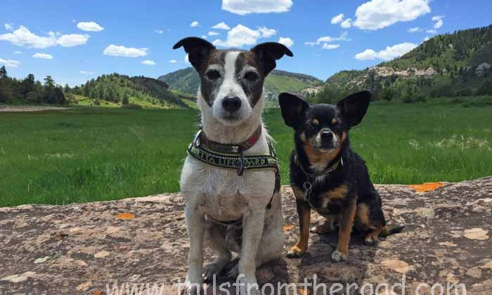 Pet Blogger Challenge 2017