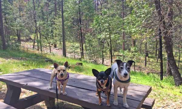 Rudi the Wonder Dog, post #3