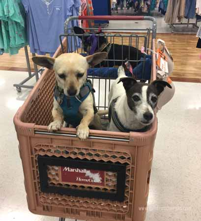This outing got Rudi adopted to his forever home.