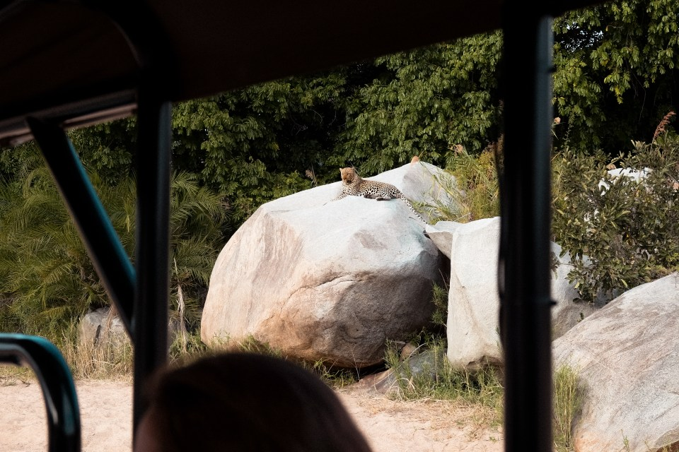 what to know before you visit the kruger park