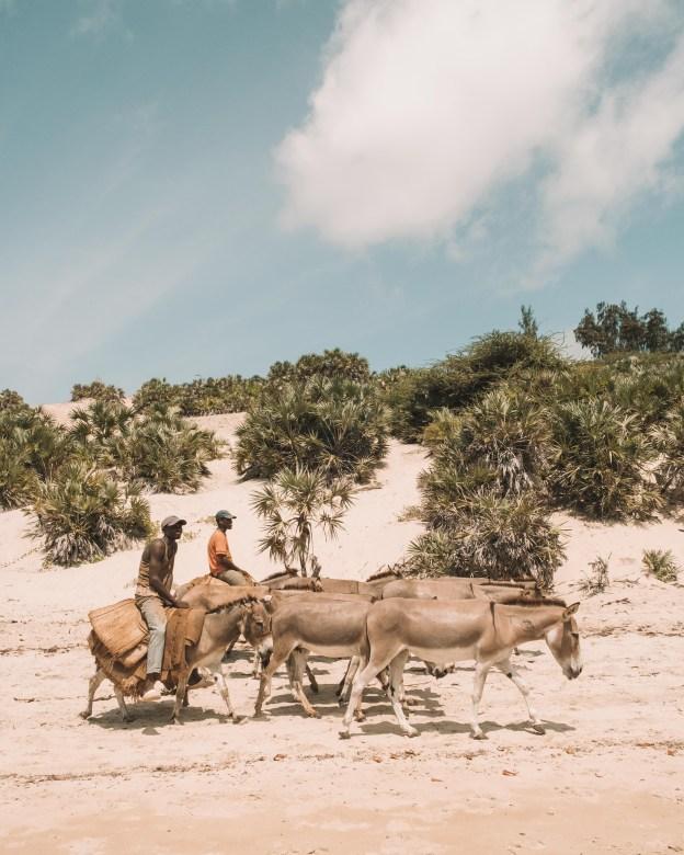 donkey on the beach lamu island kenya