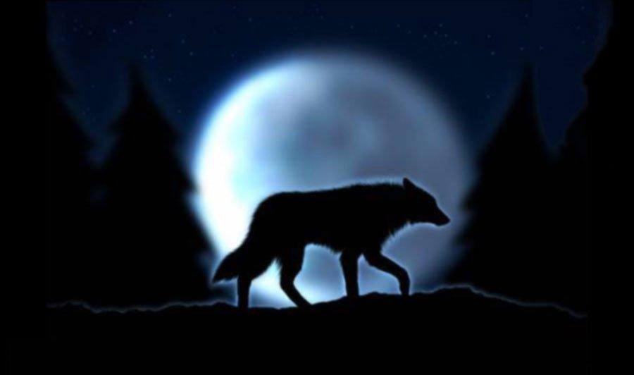 Час между волком и собакой