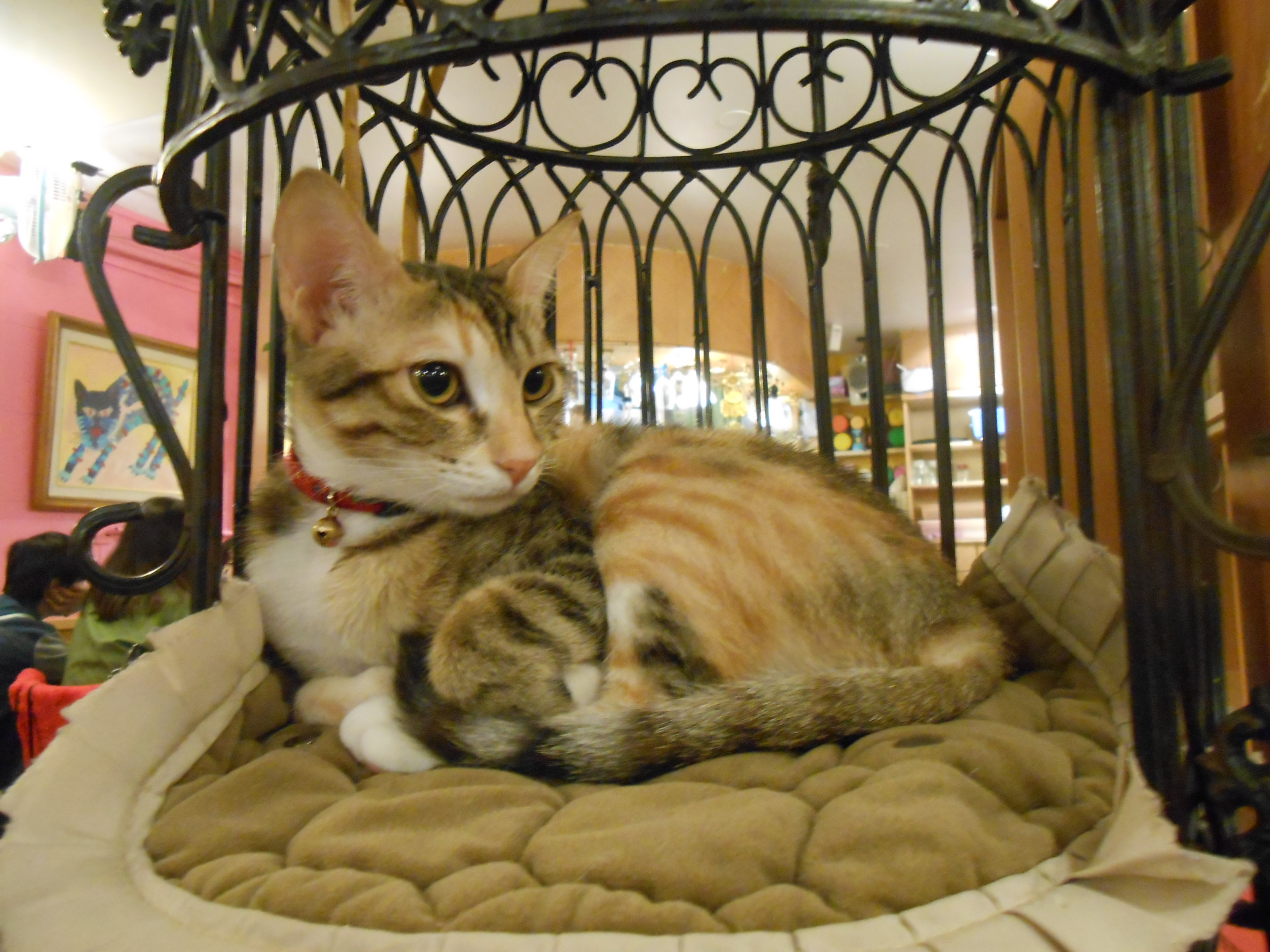 Top Ten Taiwan Cat Cafes 臺灣最佳十間貓咖啡 | Taipei Cat Cafes