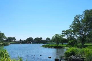 江津湖らしい景色です