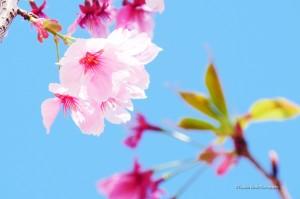 scenery-flower-20150328-04