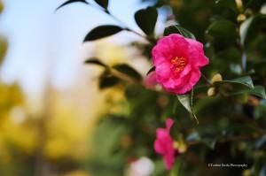 scenery-flower-20161126-01