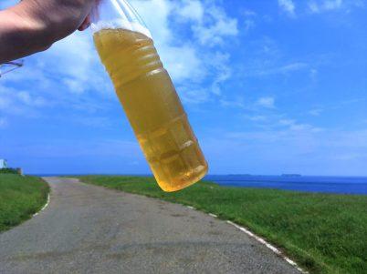 澎湖の風茹茶