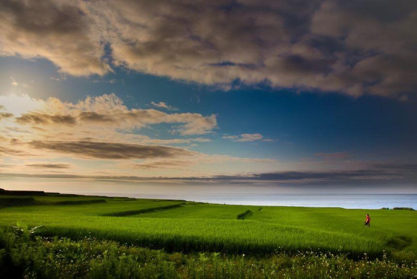 Rice fields on Hualien coast