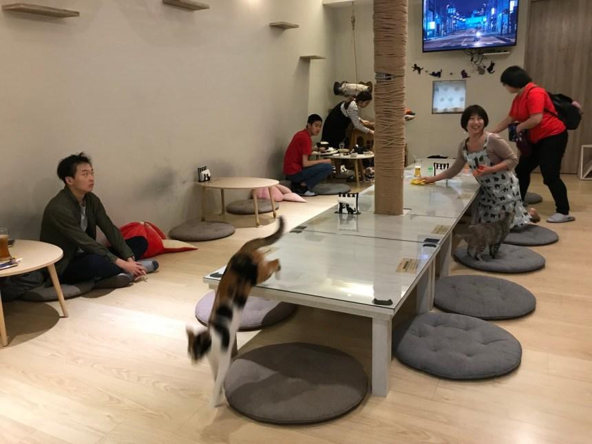 Taiwan-Scene-Cat-cafe-in-taiwan-Camulet01.jpg