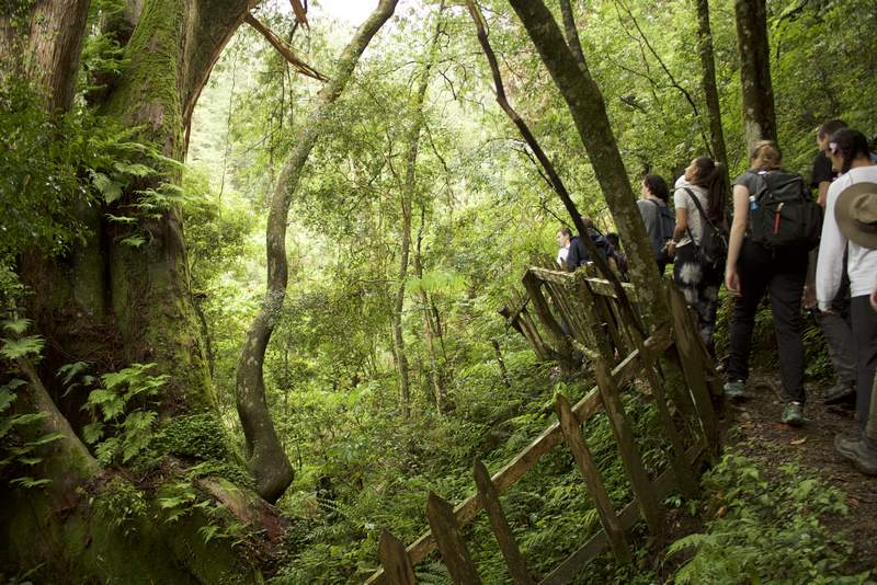 Students hiking in the old growth forest near Zhenxibao