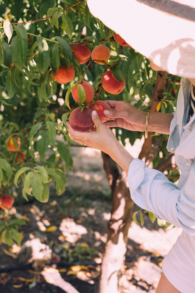 Fruit Tourism is Taiwan's Ripe New Trend! – Taiwan Scene