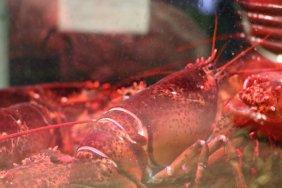 taiwan-scene-lobster-foods-7