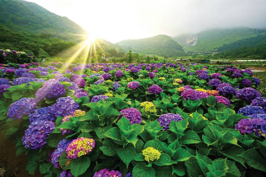 Flower-Viewing-in-Taipei-Three-Routes-Recommended-for-Couples-Friends-and-Families.jpg