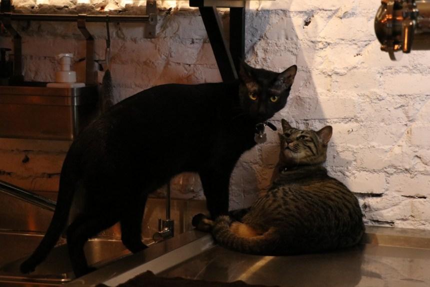 taipei-beercat-cats